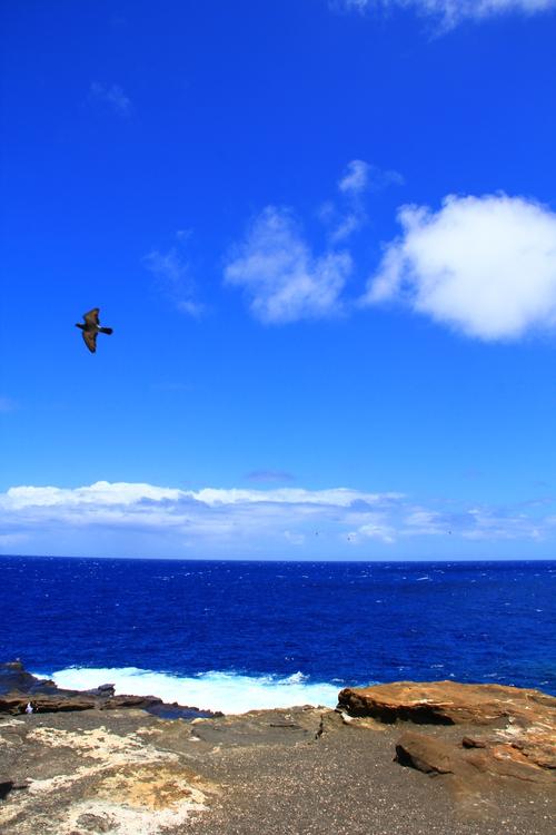 hawaii20110522 044.JPG