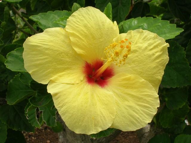 Color, Hawaii!